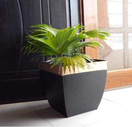 large pot for plant