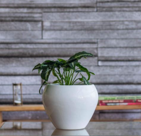 ugaoo round planter