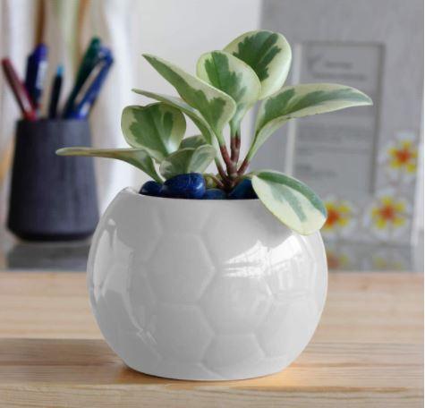 white round planter